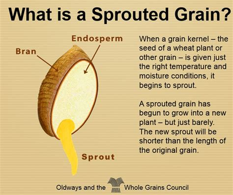 whole grains meaning sprouted grains the next big opportunity for the grain chain