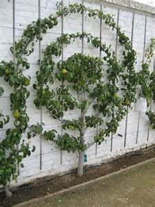 espaliered fruit trees small space orchard garden