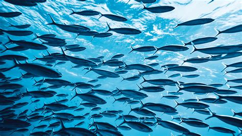 climate change could make fish shrink by up to 30 daily fish could shrink as much as 30 per cent due to climate