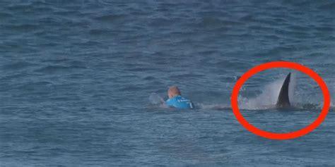 best shark attack australian surfer attacked by shark business insider