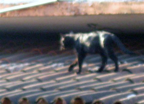 roof dog zihuathyme roof cats zihuathyme
