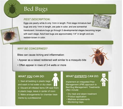 bed bug heat treatment cost bed bugs treatment cost 28 images bed bug heat