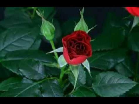 un fiore per te un fiore per te