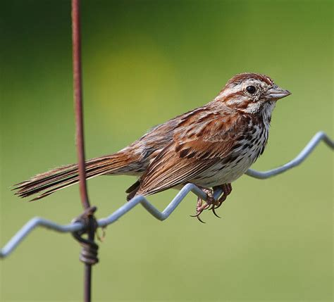when birds and buildings collide conservation articles