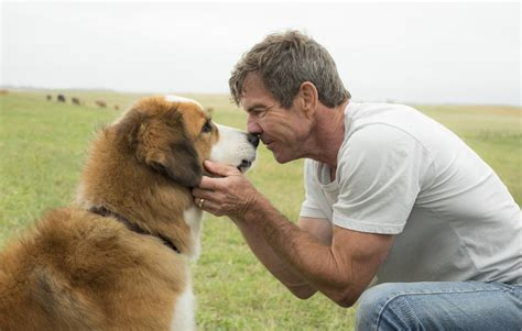 dogs purpose abuse producer of a s purpose was appalled at but shares what really happened