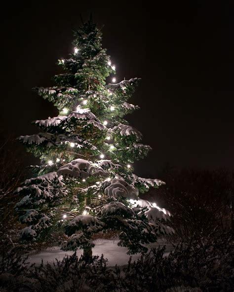 ergebnis f 252 r ein weihnachtsbaum in berlin der