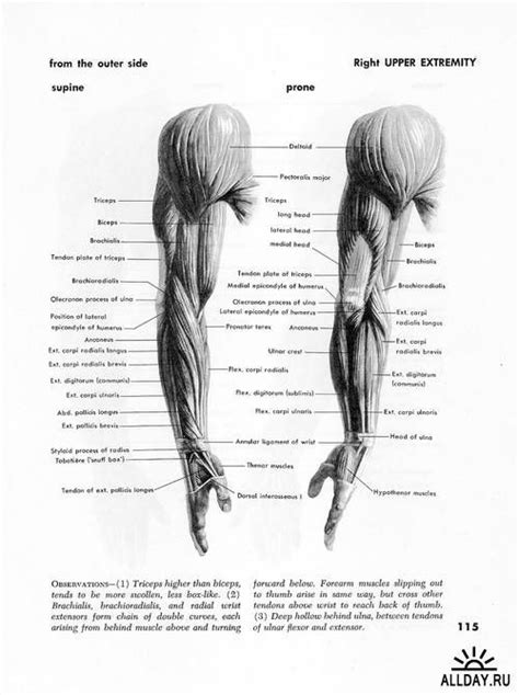 anatomy for the artist atlas of human anatomy for the artist by stephen rogers peck cerca con google tutorials