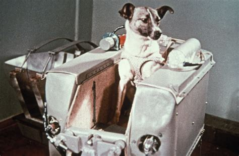 laika the astronaut laika the first dog in space in the sputnik 2 capsule