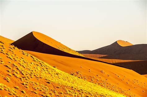 fiore deserto immagini paesaggio natura sabbia co collina