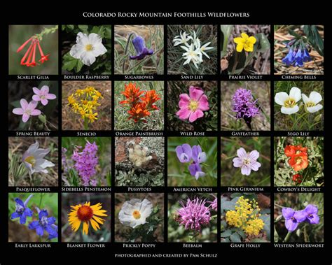 native plants evergreen audubon evergreen nature center website  earth air design