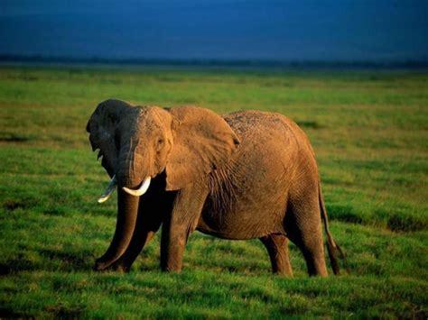 imagenes relajantes de animales hermosas fotos de animales hd taringa
