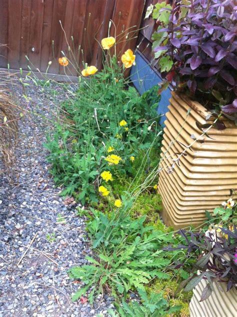 garten ideen kieselsteine 4592 besten gartengestaltung garten und landschaftsbau