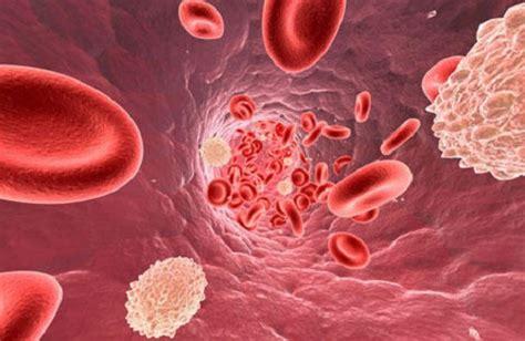 alimentazione trigliceridi trigliceridi alti e colesterolo alto dieta e cibi out