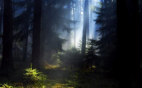 black forest black forest hd wallpapers wallpapersafari