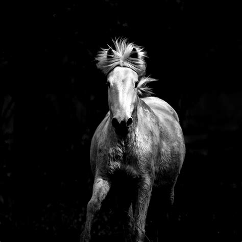 Grang Galop by Grand Galop Photo Et Image Nature Camargue Animaux