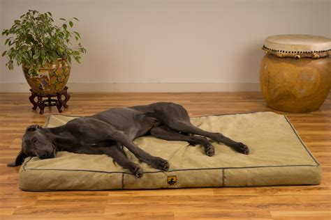 great dane home decor great dog beds for small dogs dogvills dog beds and costumes