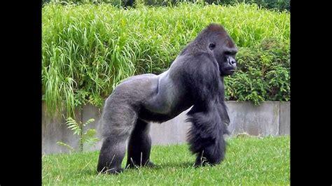 imagenes interesantes de africa 42 cosas interesantes sobre los animales youtube