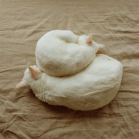 Cat Soft Stools by 17 Best Images About The Cat Within On