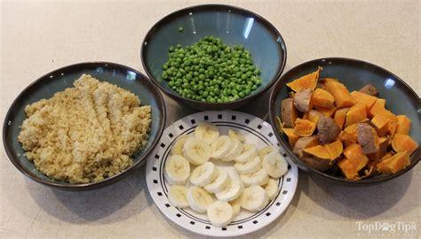 vegan diet for dogs vegetarian food recipe top tips