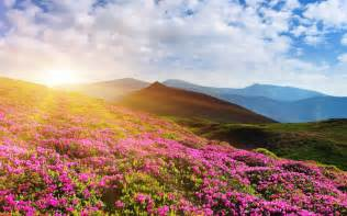 Flowers In The Grasslands - wallpaper rhododendron flowers mountain summer pink 4k