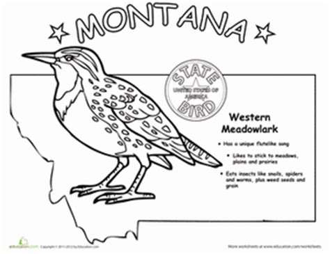 Montana State Bird Worksheet Education Com Montana Coloring Page