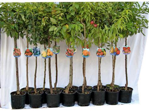 piante ricanti da vaso piante ricanti in vaso piante perenni da vaso idee per