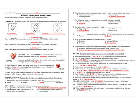 Cell Size Worksheet Answers