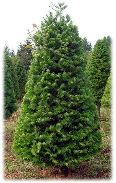 best type of tree lights backyard landscape tree types the types and
