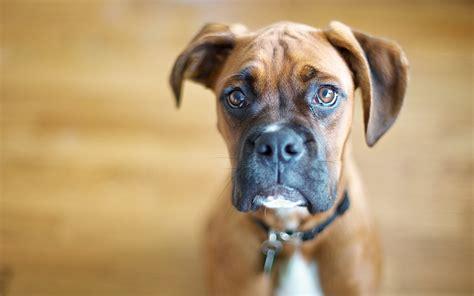 guilty puppy guilty 2560 x 1600 animals photography miriadna