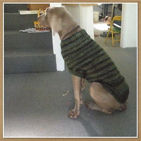 knitting pattern dog sweater large large dog sweater knitting pattern pdf