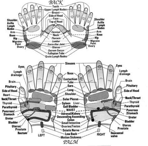micro et macro anatomies de l homme
