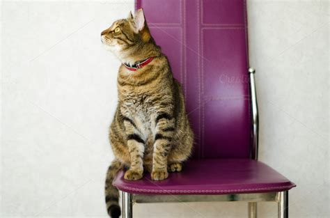 Cat Sitting In Chair by Tabby Cat Sitting On A Chair Animal Photos On Creative