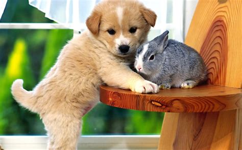 dog wallpapers widescreen desktop wallpaper box bunny and puppy hd dog photos puffy animals best