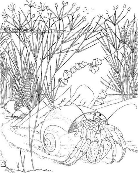 coloring pages for adults only coloring pages free coloring pages