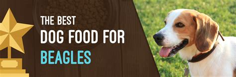 best puppy food for beagles beagles food ratings