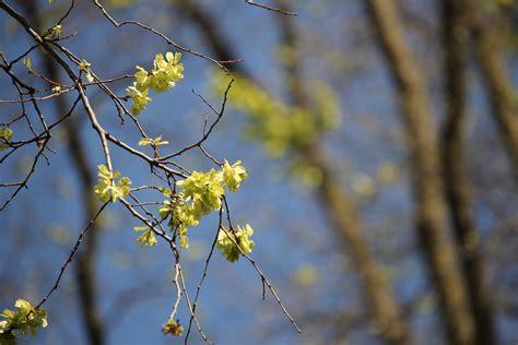 Daun Semi musim semi di melbourne segarnya hijau