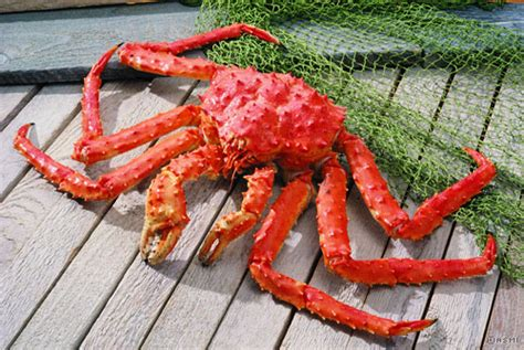 alaska king crab king crab facts captain s seafood locker