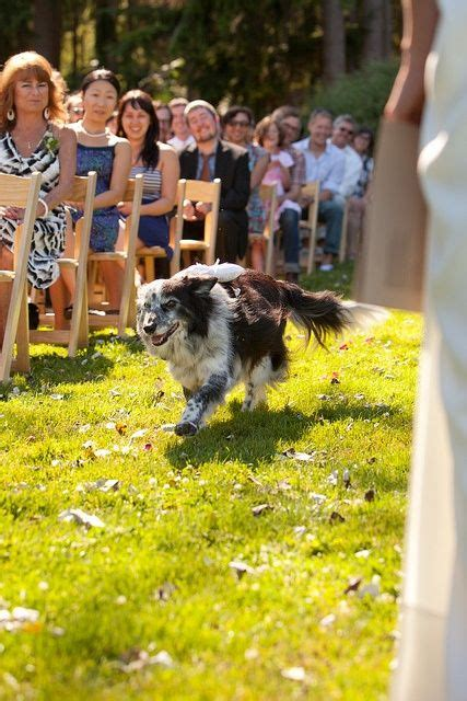 Wedding For Your Beloved Pet by 1000 Images About Wedding Ring Bearers On