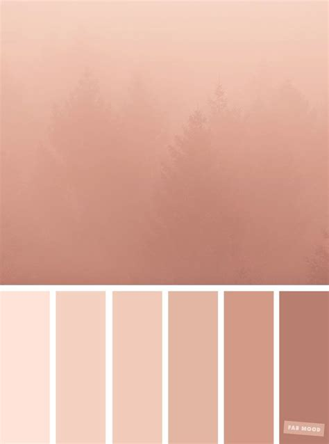 blush colors blush tones pretty blush color scheme color palettes