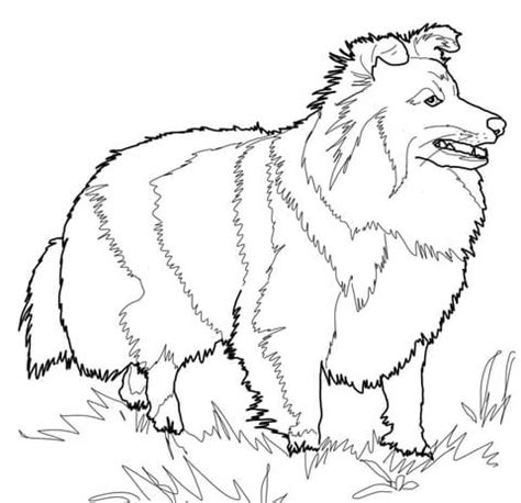 sheep dog coloring page shetland sheepdog coloring page free printable coloring