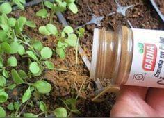 Zimt Gegen Pilze Im Garten by Die Besten 25 Pflanzen Ideen Auf