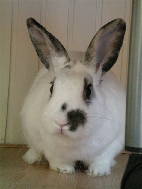 12 Md Rabbit Bery White yours mine ours page 7