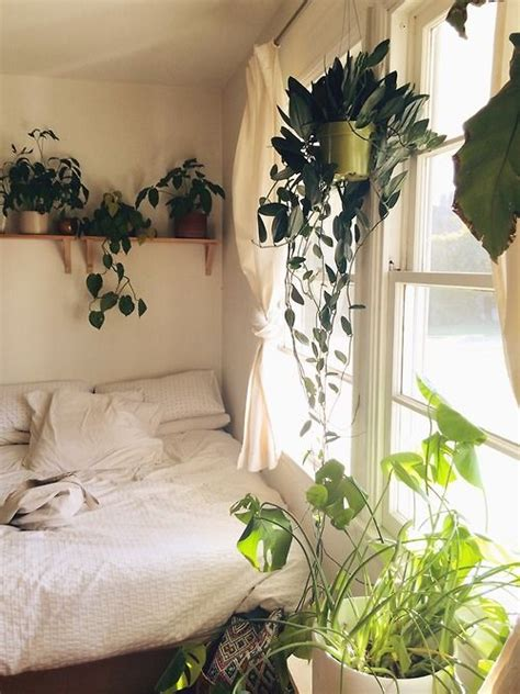 best plants for bedroom best 25 bedroom plants ideas on pinterest plants in bedroom best plants for bedroom and