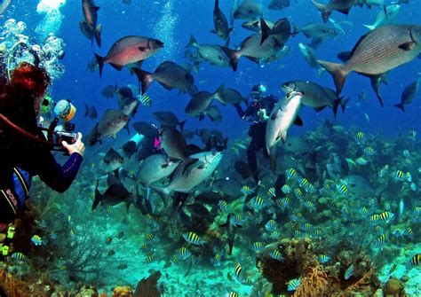 belize dive safari scuba upcoming overseas trips
