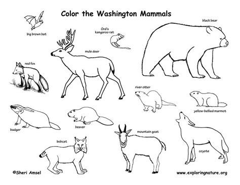 exploring nature coloring pages washington exploring nature educational resource