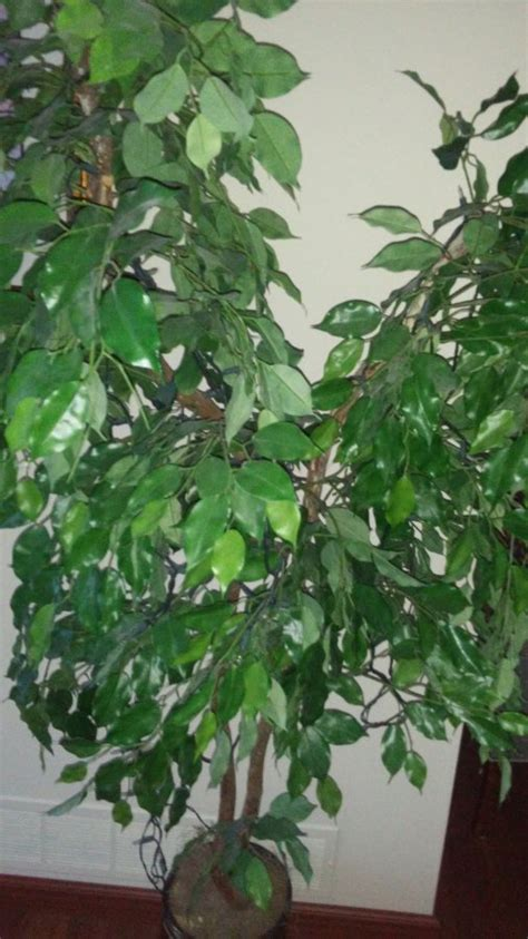 artificial ficus tree for sale pittsburgh pittsburgh