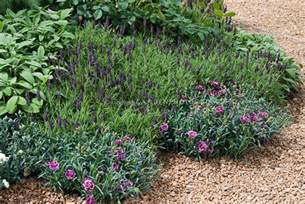 Fragrant Garden Flowers Fragrant Flowers Herbs In Gravel Garden Plant Flower Stock Photography Gardenphotos