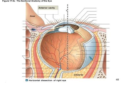 sectional anatomy of the eye game statistics the sectional anatomy of the eye 2