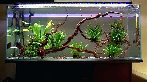 Decors Aquarium by Home Aquarium Decoration Ideas Home Decorating Ideas