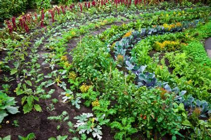 how to grow an organic vegetable garden lovetoknow